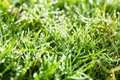 Fresh spring green grass close up image of Stock Image