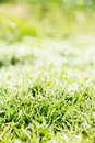 Fresh spring green grass close up image of Stock Photo