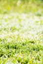Fresh spring green grass close up image of Stock Images