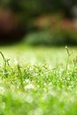 Fresh spring green grass image of Stock Photography