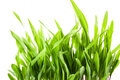 Fresh spring green grass isolated on white background Stock Photography