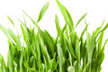 Fresh spring green grass isolated on white background Stock Photos