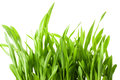Fresh spring green grass isolated on white background Royalty Free Stock Photos