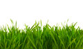 Fresh spring green grass isolated on white Royalty Free Stock Photo