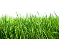 Fresh spring green grass isolated on white background Royalty Free Stock Photo