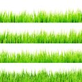 Fresh spring green grass isolated on white eps and also includes vector Royalty Free Stock Photo