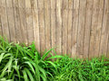 Fresh spring green grass over wood fence background outdoors photography of wooden Royalty Free Stock Image