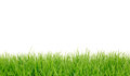 Fresh spring green grass panorama. Royalty Free Stock Photography