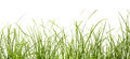 Fresh spring green grass panorama isolated on white background Stock Image