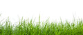 Fresh spring green grass panorama isolated on white background Royalty Free Stock Images