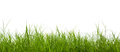 Fresh spring green grass panorama isolated on white background Stock Photos