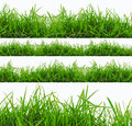 Fresh spring green grass panorama isolated on white background. Royalty Free Stock Photo