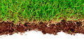 Fresh spring green grass with soil. Royalty Free Stock Photography