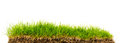 Fresh spring green grass with soil isolated on white background Stock Photos