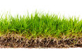 Fresh spring green grass with soil isolated on white background Stock Image