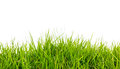 Fresh spring green grass with soil isolated on white background Royalty Free Stock Image