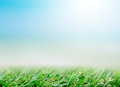 Fresh spring green grass under beautiful blue sky Royalty Free Stock Photo