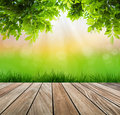 Fresh spring green grass and wood floor with green leaf summer time Royalty Free Stock Photography