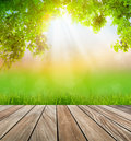 Fresh spring green grass and wood floor with leaf summer time Stock Photography
