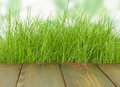 Fresh spring green grass with wood floor and natural background Royalty Free Stock Photography