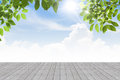 Fresh spring green leaves  bule sky with  concrete floor isolate Royalty Free Stock Photo