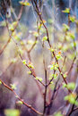 Fresh spring leaves Royalty Free Stock Photo