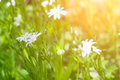 Fresh Spring meadow Royalty Free Stock Photo