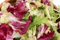 Fresh Spring Mix Lettuce Stock Photography