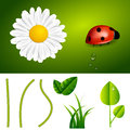 Fresh Spring and Summer Nature Elements Royalty Free Stock Photo