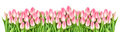 Fresh spring tulip flowers banner Floral border Bouquet Royalty Free Stock Photo