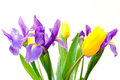 Fresh spring tulips and iris flowers. Royalty Free Stock Images