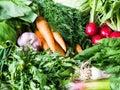 Fresh Spring vegetables and herbs - carrots, ramson, radish, dill, garlic, arugula, green onions background