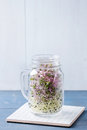 Fresh sprouts in mason jar healthy diet garlic and radish glass standing on ceramic tile over blue wooden table rustic style Stock Photo