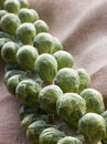 Fresh Sprouts On Stalk Royalty Free Stock Image