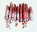 Fresh squid loligo vulgaris after catch Royalty Free Stock Images