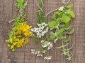 Fresh st john s wort coriander and rosemary plants on the wooden background studio shot Royalty Free Stock Image
