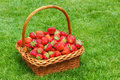 Fresh strawberries in a basket Royalty Free Stock Photo