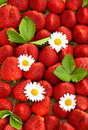 Fresh strawberries with daisy flowers food background Royalty Free Stock Photos