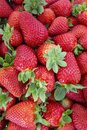 Fresh Strawberries fruits close up background, species Fragaria ananassa cultivated worldwide. Royalty Free Stock Photo