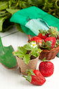 Fresh strawberries and garden tools Stock Photos