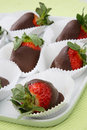 Fresh strawberries in melted chocolate Royalty Free Stock Photos