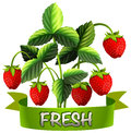 Fresh strawberries with sign Royalty Free Stock Photo