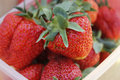 Fresh strawberries in the summer Royalty Free Stock Photo