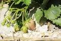 Fresh strawberry background Stock Photos