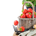 Fresh strawberry in a basket with garden tools Stock Photography