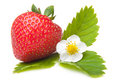 Fresh strawberry with flower on isolated white Royalty Free Stock Photo
