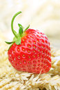 Fresh strawberry home grown on a bed of wheat Stock Images