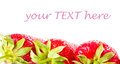 Fresh strawberry isolated on white background with sample text ripe studio macro Stock Images