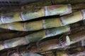 Fresh sugar cane , Concept  Raw material for sugar Royalty Free Stock Photo