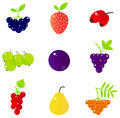 Fresh summer berries and exotic fruit set collection vector illustration Royalty Free Stock Image